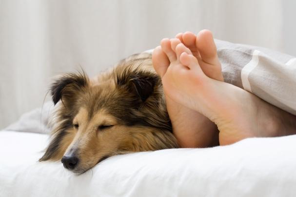dog in bed (2).jpg