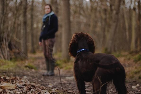dog in woods (2).jpg