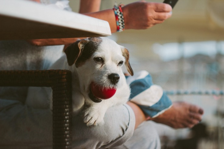 Dog with ball (2).jpg