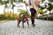 dog walking on leash.jpg