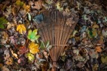 leaves rake.jpg